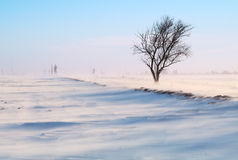 Tree in a snow-covered field. Lonely tree in a snow-covered field, a strong wind, a blizzard stock photography
