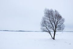 Tree in a snow-covered field Stock Images