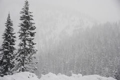 Tree on a snow covered hill. Dusted tree on top of a snow covered hill in a storm Stock Photography