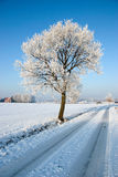 Tree by snow covered road Royalty Free Stock Photo