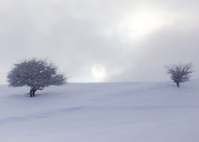 Tree in the snow at dawn sun Royalty Free Stock Photos