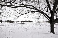 Tree and Snow Field at Valley Forge National Park stock photos