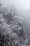 Tree with snow fog and tree. Yellow mountain of China,with snow, fog and trees Stock Image