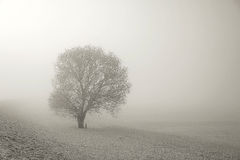Tree and snow in the fog Royalty Free Stock Photo