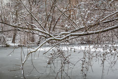 Tree with snow by a frozen river Stock Images