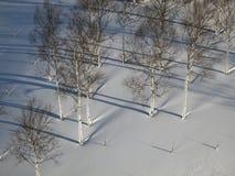 Tree and snow in Hokkaido Stock Photo