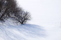 Tree in snow. Leafless tree in snow field Stock Photography