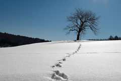 Tree in the snow lighten by full moon at night. Stock Photography