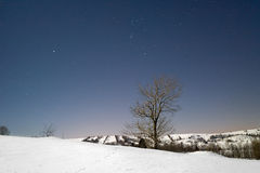 Tree in the snow lighten by full moon at night. Royalty Free Stock Images