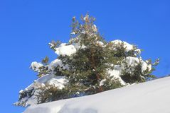 Tree with snow in mountain. A tree with snow in mountain Royalty Free Stock Photo
