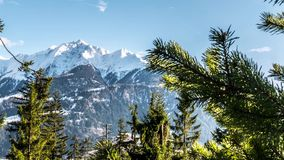 Tree Snow Mountain View Spring Timelapse 4k. Timelapse of trees with a beautiful mountain view in the background. 4k footage stock video footage