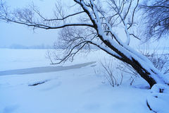 Tree in snow near the frozen river Royalty Free Stock Photo