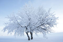 Tree with snow and nice background Stock Images