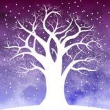 Tree in snow overnight Stock Photo