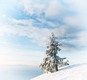 Tree in snow Royalty Free Stock Image