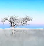 Tree with snow reflected in ice Royalty Free Stock Image