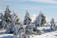 Tree and snow. Some trees with snow in germany Stock Image