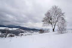 The tree and snow Stock Photography