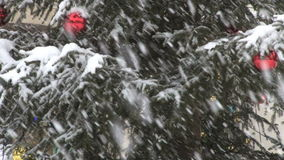 Tree in snow storm. Video of tree in snow storm stock footage