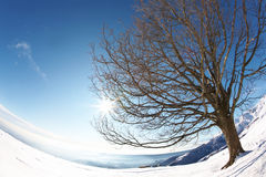 Tree snow sun Royalty Free Stock Photos