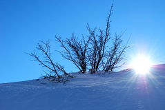 Tree, snow and sun Royalty Free Stock Photography