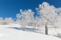 Tree of snow town Royalty Free Stock Images