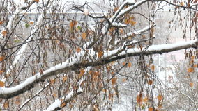 Tree in the snow. The video shows branch of a tree in the snow stock video footage
