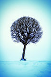 Tree on the Snow Royalty Free Stock Images