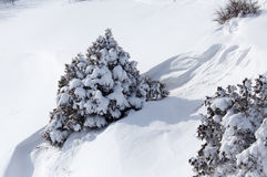 Tree in the snow in winter in the mountains Stock Image