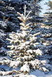 Tree  snow  winter  wood Stock Image