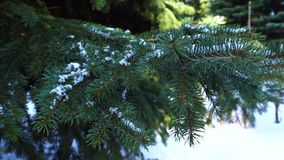 Tree in snow, winter. Wood tree in snow, cold winter stock video footage