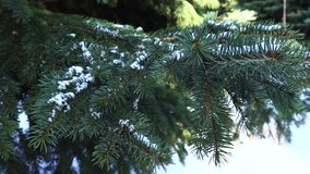 Tree in snow, winter. Wood tree in snow, cold winter stock footage