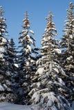 Tree  snow  wood Stock Photography