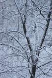 Tree in snow. Wood peppered with white, fluffy snow Royalty Free Stock Photo