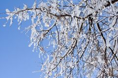 A tree after snowfall. Royalty Free Stock Photography