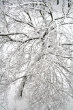 A tree after snowfall. A tree after snowfall, view from above Stock Images