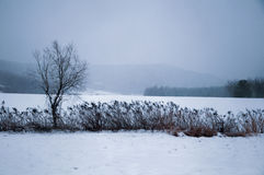 A tree in snowfield Royalty Free Stock Image
