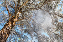 Tree and snowflake flying Royalty Free Stock Photography