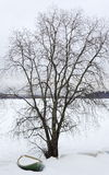 Tree in snowy countryside Stock Images