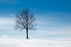 Tree in snowy field Stock Photography