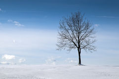 Tree in snowy field Royalty Free Stock Images