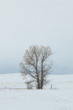 Tree in snowy field Royalty Free Stock Photos