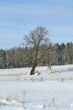 Tree on snowy field Royalty Free Stock Photography