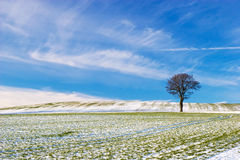 Tree on Snowy Field stock image