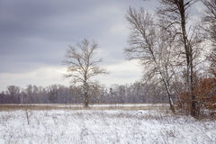 A tree in snowy field Stock Photography