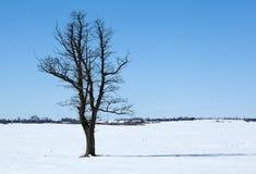 Tree among snowy field Royalty Free Stock Image