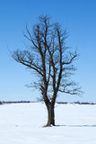 Tree among snowy field Stock Photo