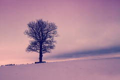 Tree on the snowy field Royalty Free Stock Image