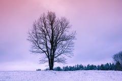 Tree on the snowy field Royalty Free Stock Photo