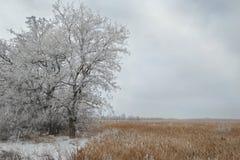 Tree in snowy field Royalty Free Stock Image